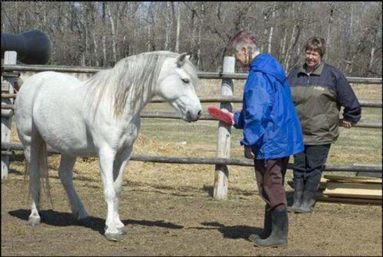 Women and Horses – Exploring the Magical Bond