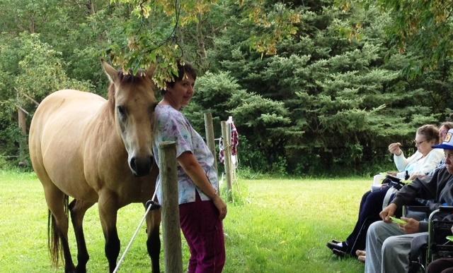 Horses as Healer